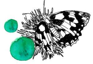 papillion et taches vertes