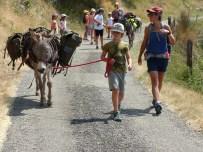 Découverte de la conduite de l'âne